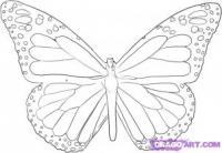 бабочку карандашом  для начинающих