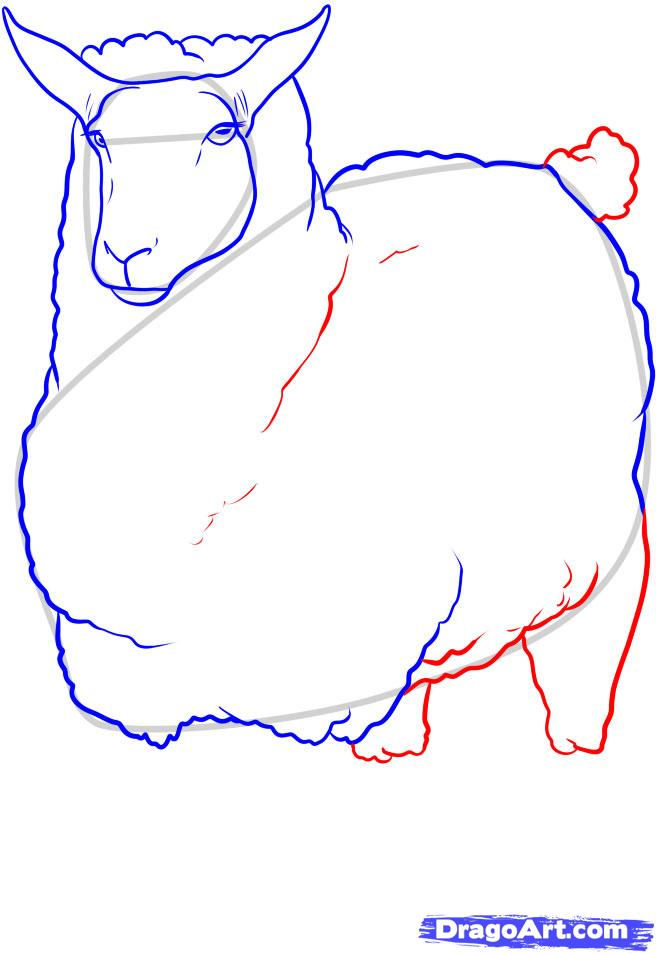 Рисуем овцу