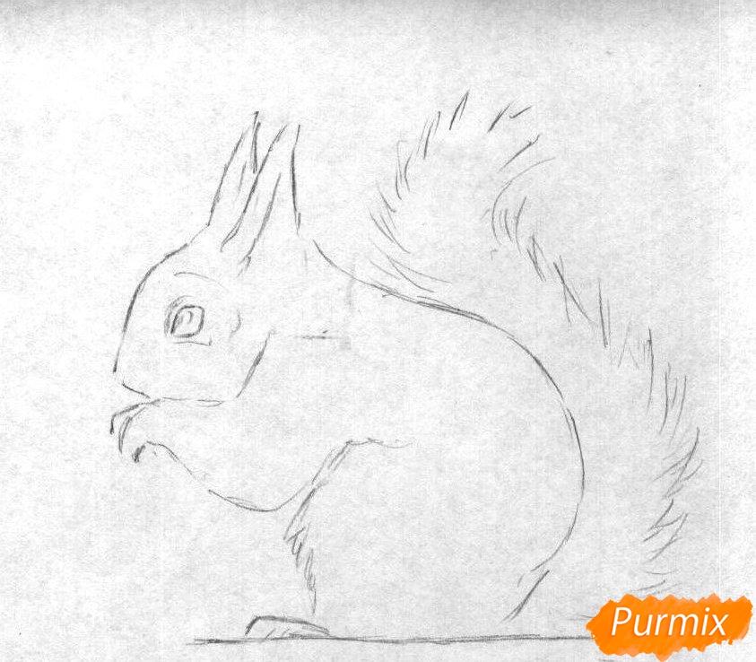 Рисуем белку карандашами и ручкой - шаг 1