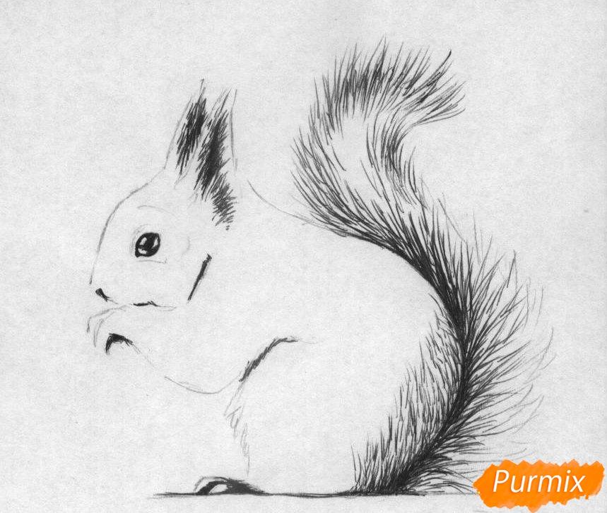 Рисуем белку карандашами и ручкой - шаг 2
