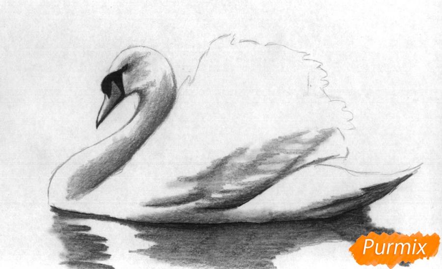 Рисуем белого лебедя карандашами и чёрной ручкой - шаг 3