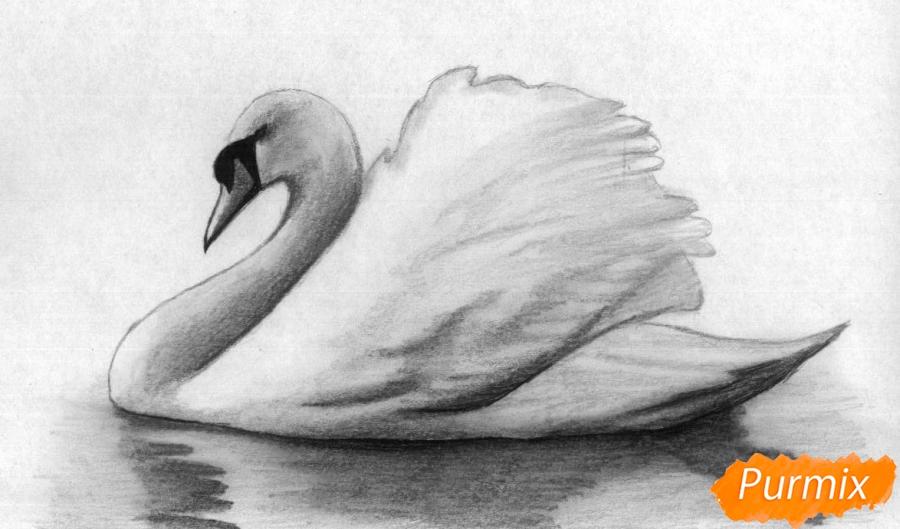 Как нарисовать белого лебедя карандашами и чёрной ручкой поэтапно
