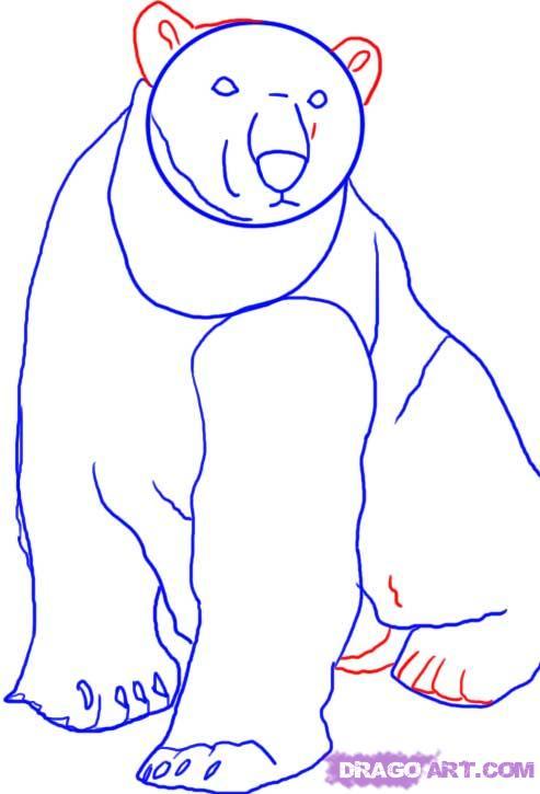 Как нарисовать Белого медведя карандашом поэтапно