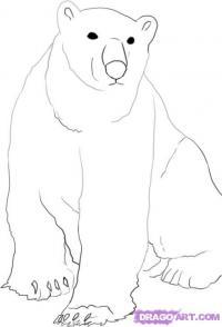 Белого медведя карандашом