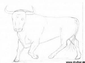 Рисуем быка в движении - фото 2