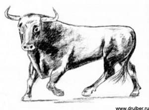 Рисуем быка в движении - фото 3