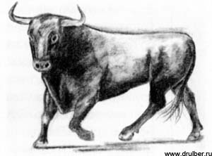 Рисуем быка в движении - фото 4