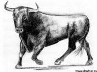Фото быка карандашом