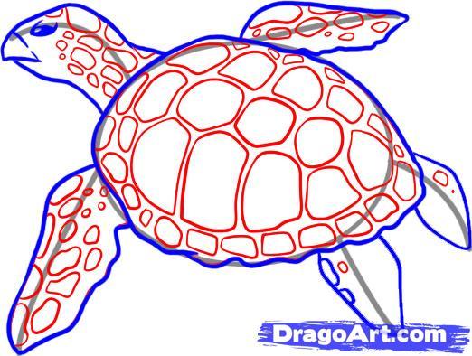 Рисуем черепаху - шаг 4