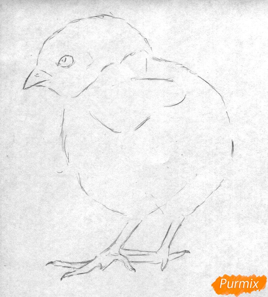 Рисуем цыплёнка простыми карандашами и чёрной ручкой - шаг 1