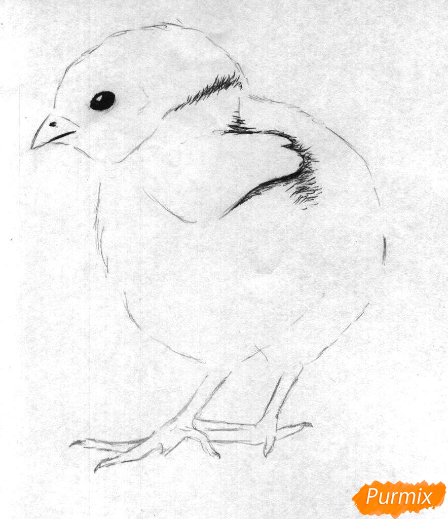 Рисуем цыплёнка простыми карандашами и чёрной ручкой - шаг 2