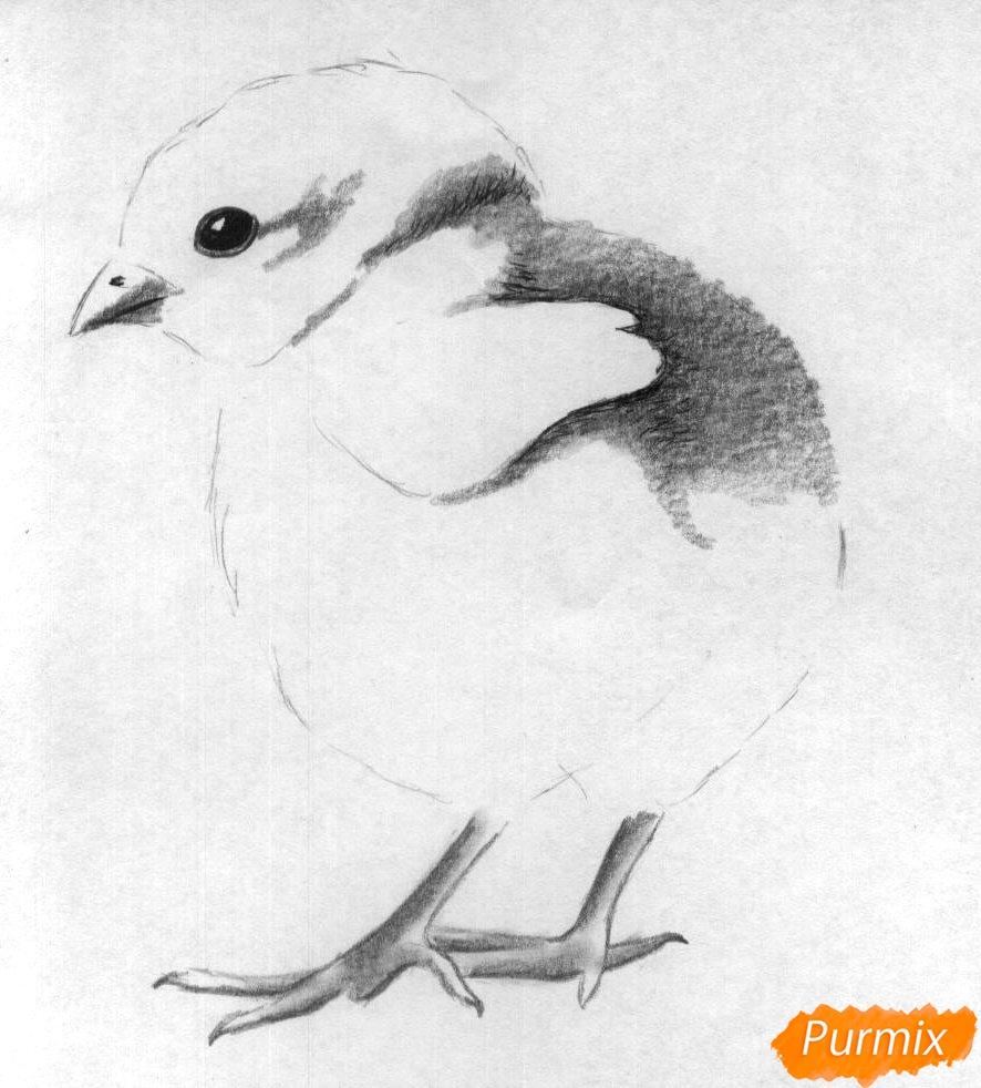 Рисуем цыплёнка простыми карандашами и чёрной ручкой - шаг 3