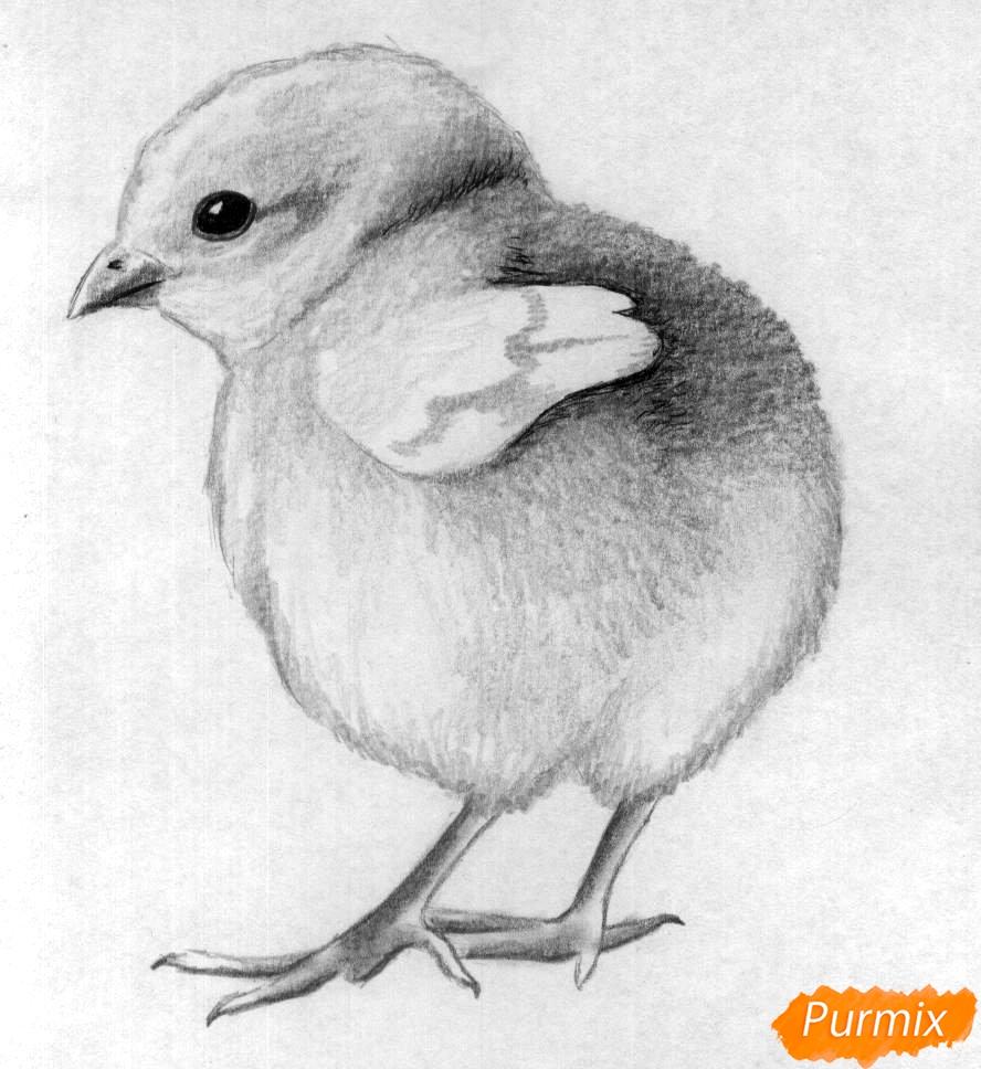 Как нарисовать цыплёнка простыми карандашами и чёрной ручкой поэтапно
