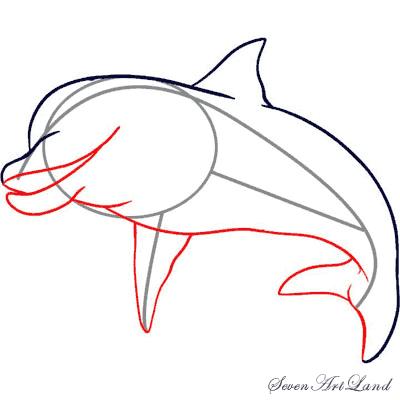 Как просто нарисовать Дельфина   для начинающих - шаг 3