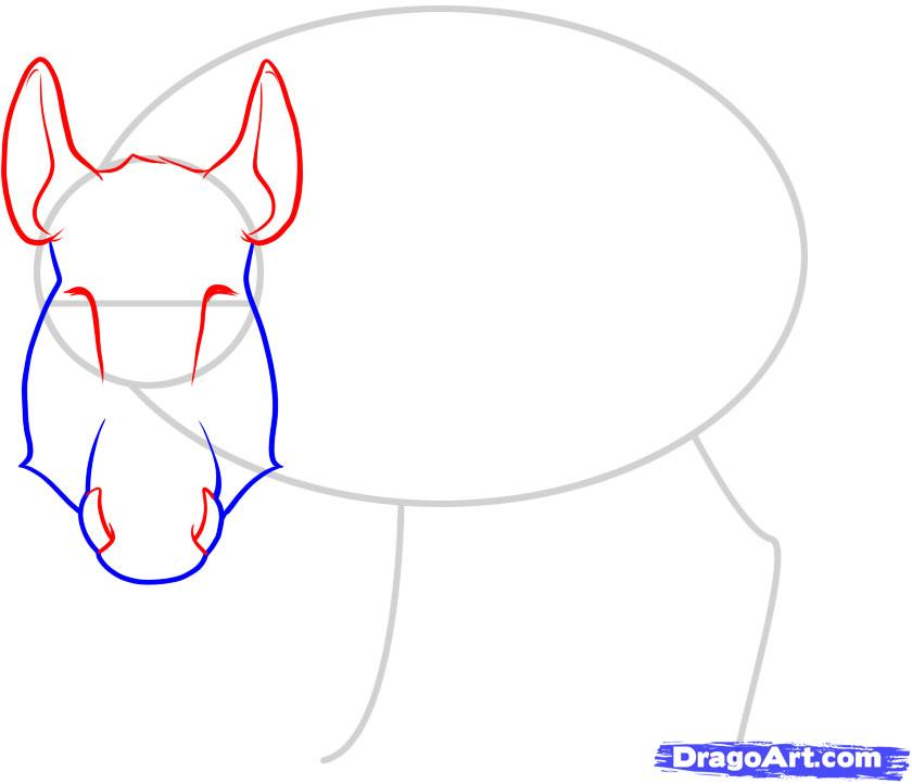 Рисуем дикого кабана - фото 3