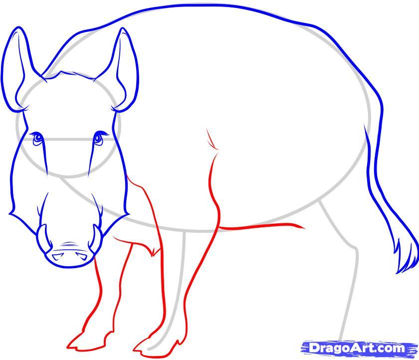 Рисуем дикого кабана - фото 6