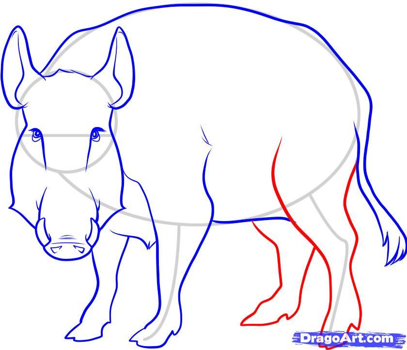 Рисуем дикого кабана - фото 7