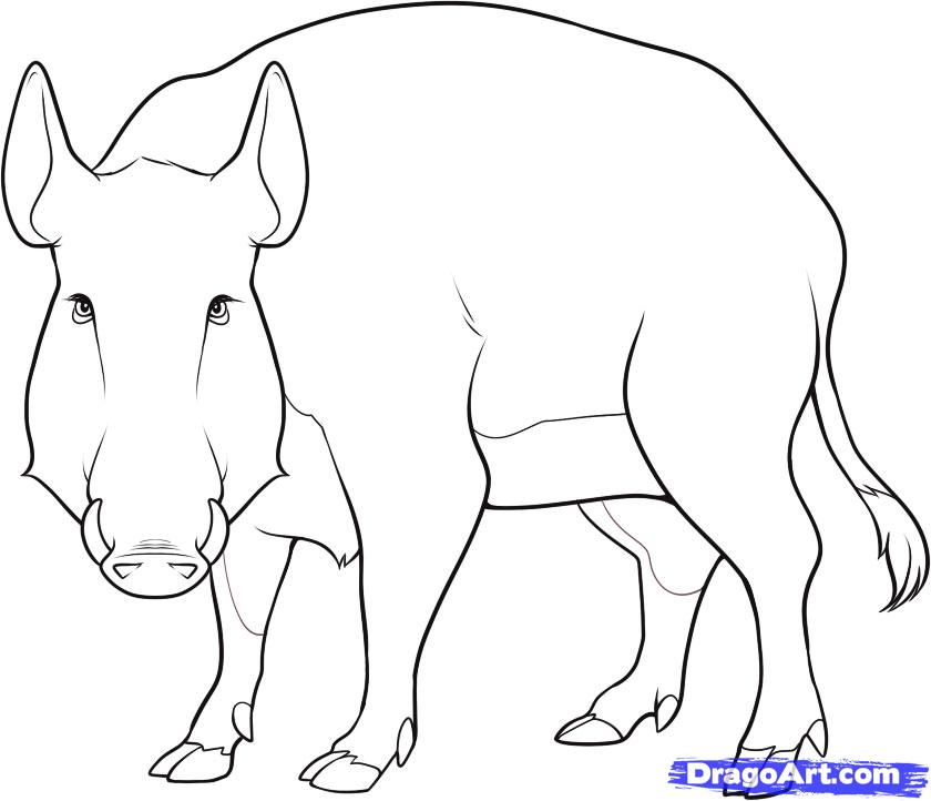 Как нарисовать дикого кабана карандашом поэтапно
