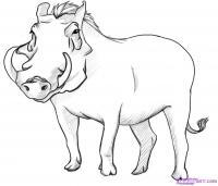 Как нарисовать дикую Свинью карандашом поэтапно