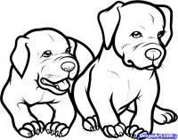 Фото двух щенков питбуля карандашом