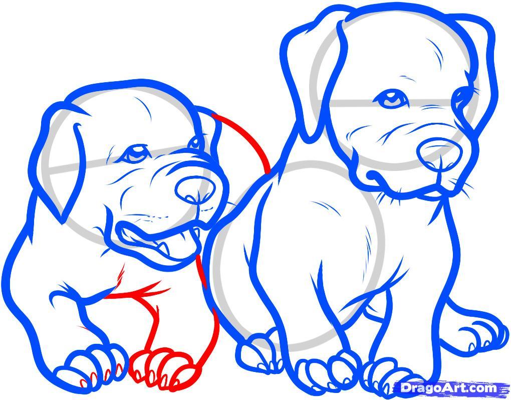 Рисуем двух щенков питбуля - шаг 10