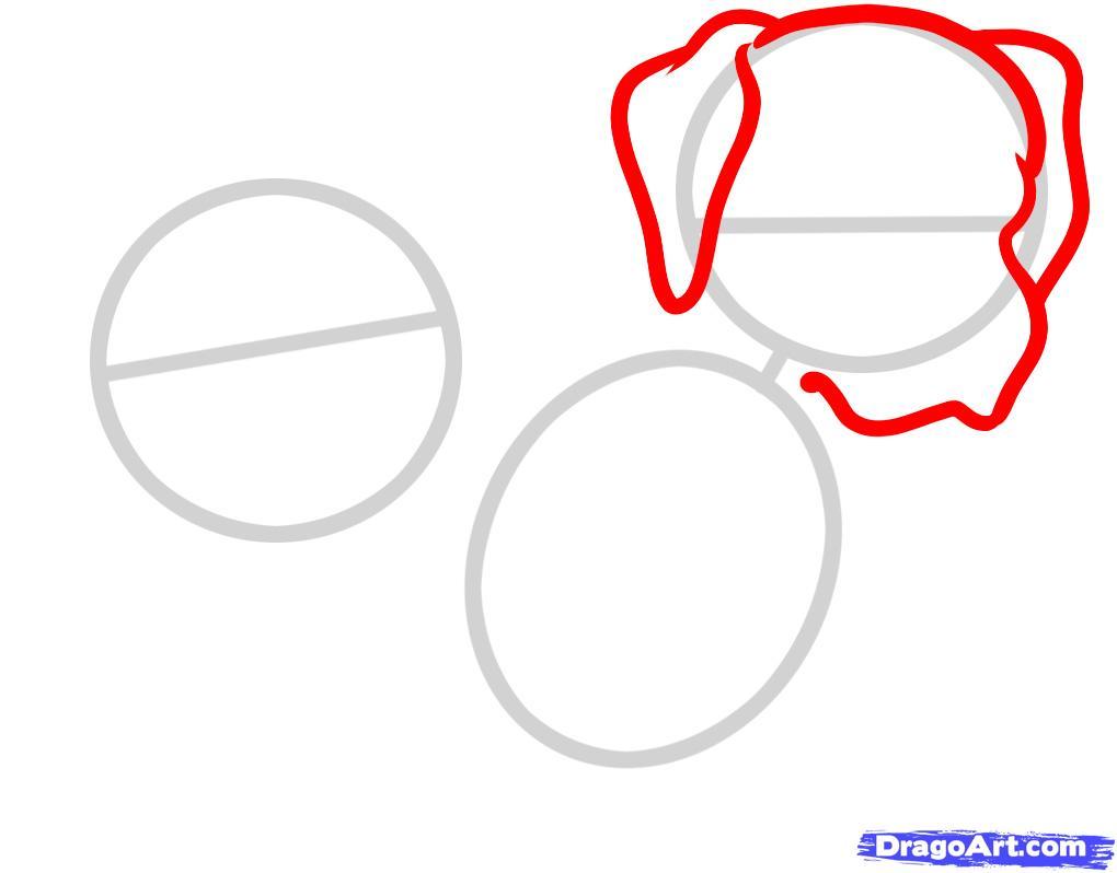 Рисуем двух щенков питбуля - шаг 2
