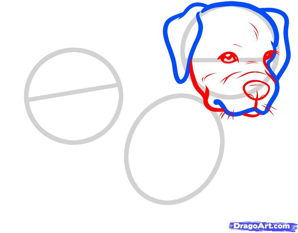 Рисуем двух щенков питбуля - шаг 3