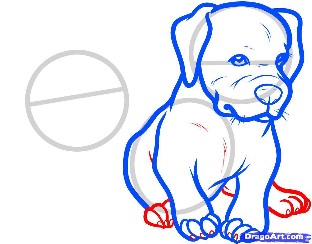Рисуем двух щенков питбуля - шаг 6