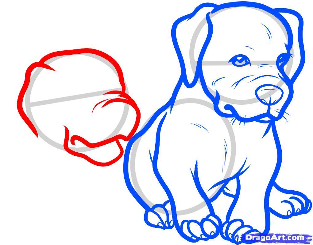 Рисуем двух щенков питбуля - шаг 7