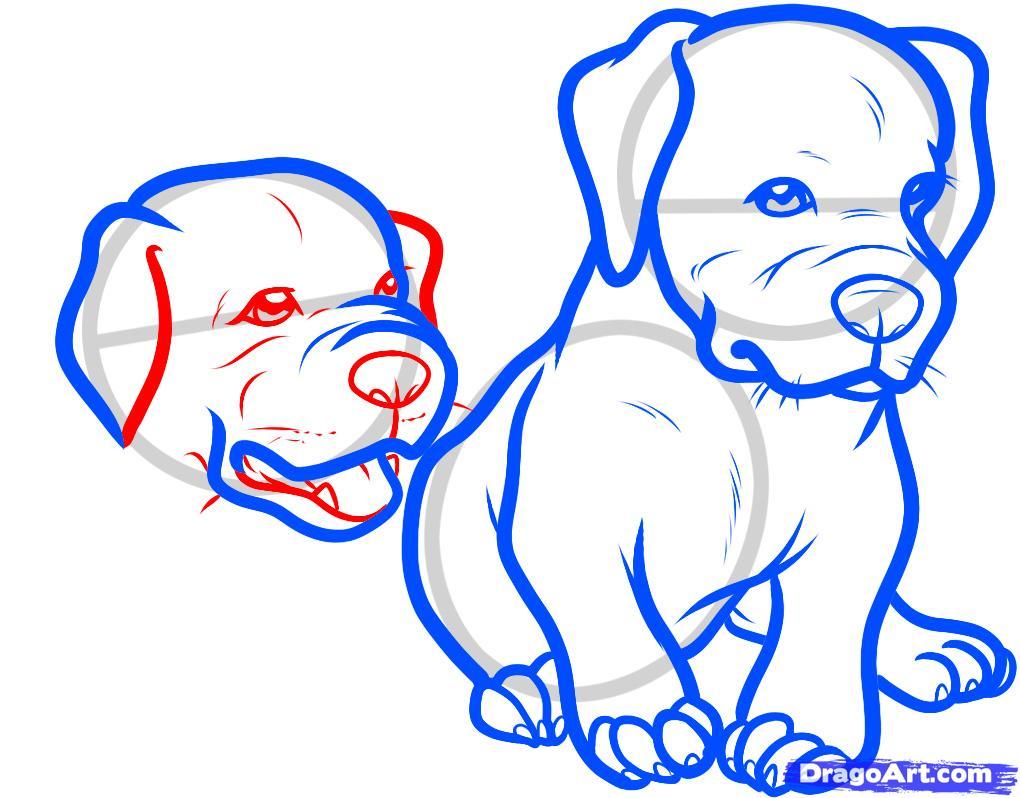 Рисуем двух щенков питбуля - шаг 8