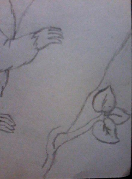 Рисуем енота на дереве - шаг 8