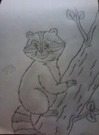 Фото енота на дереве простым карандашом