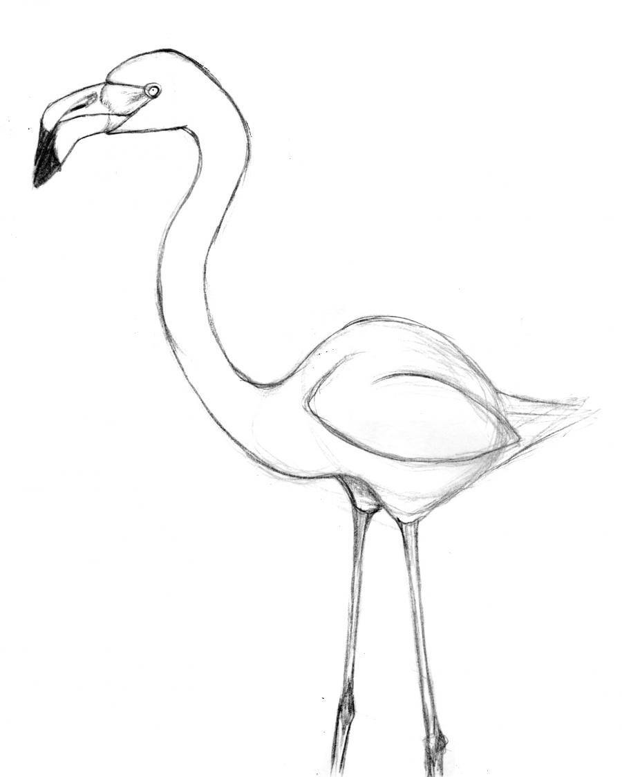 Как нарисовать фламинго по памяти