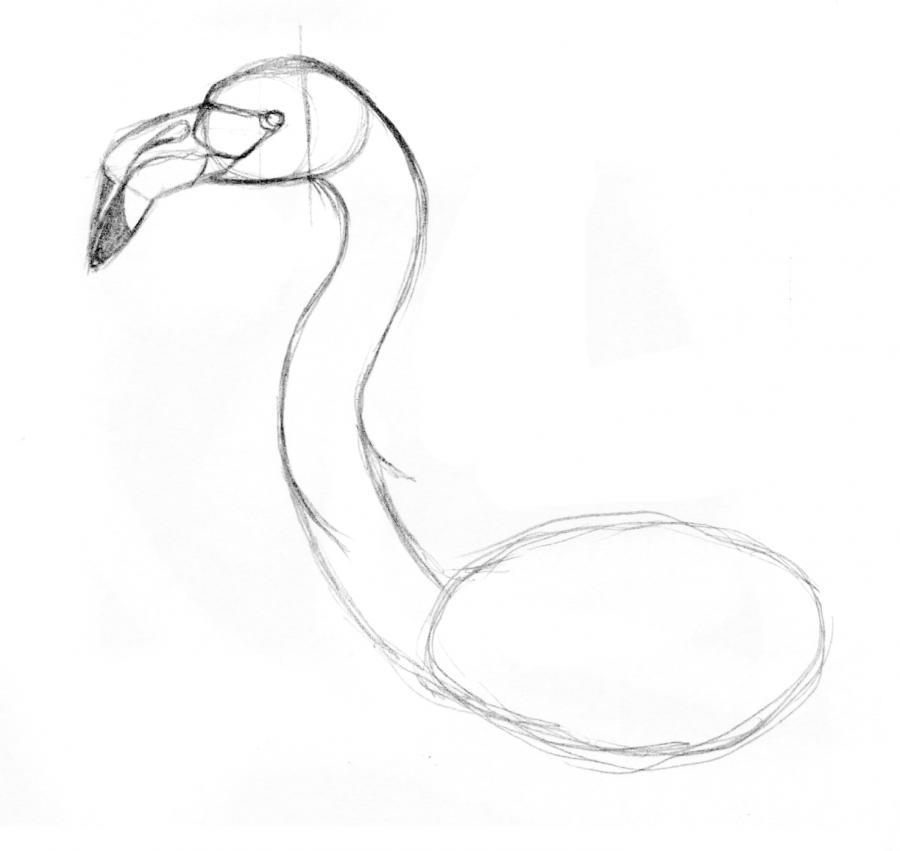 Рисуем фламинго по памяти - шаг 7