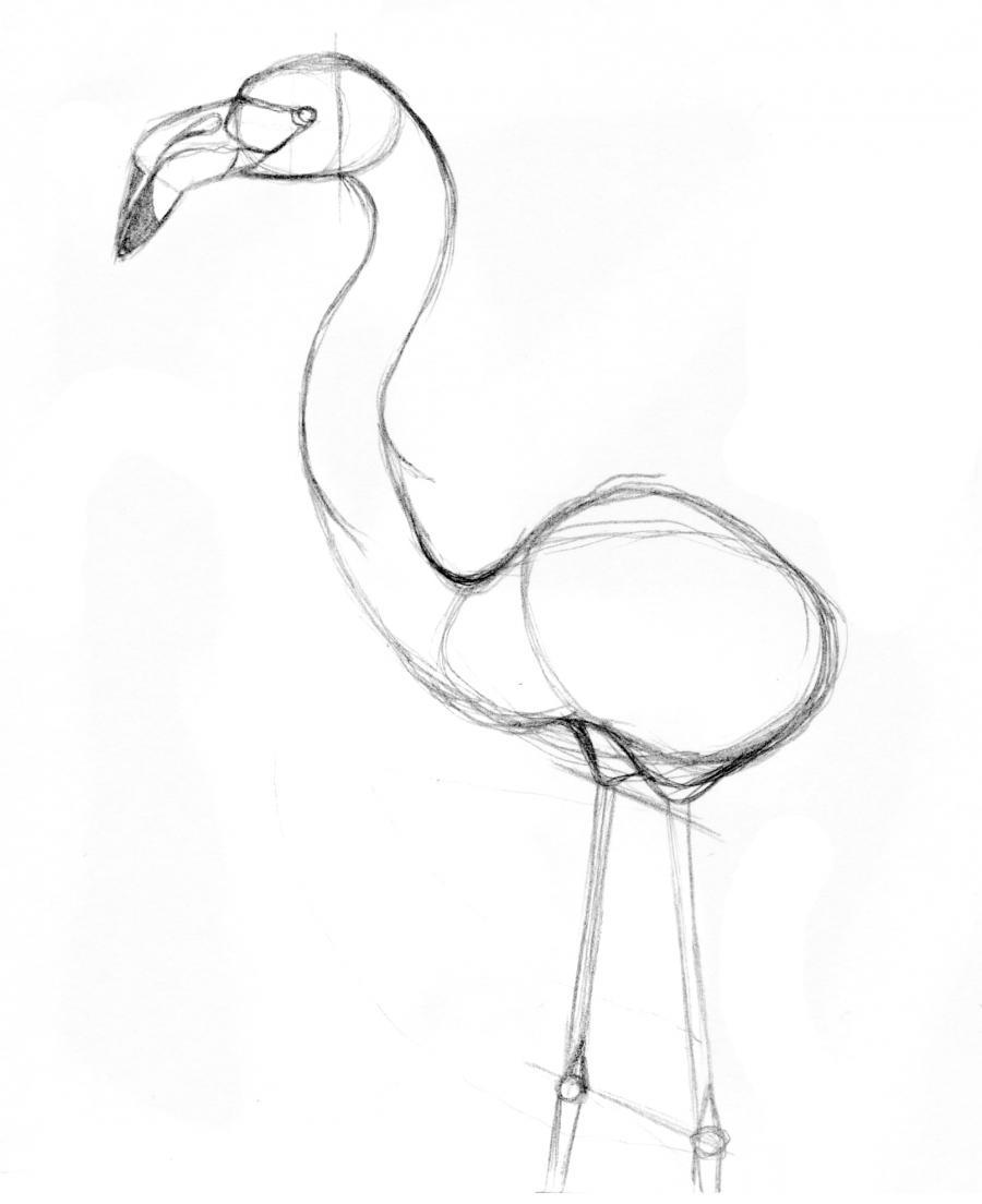 Рисуем фламинго по памяти - шаг 9