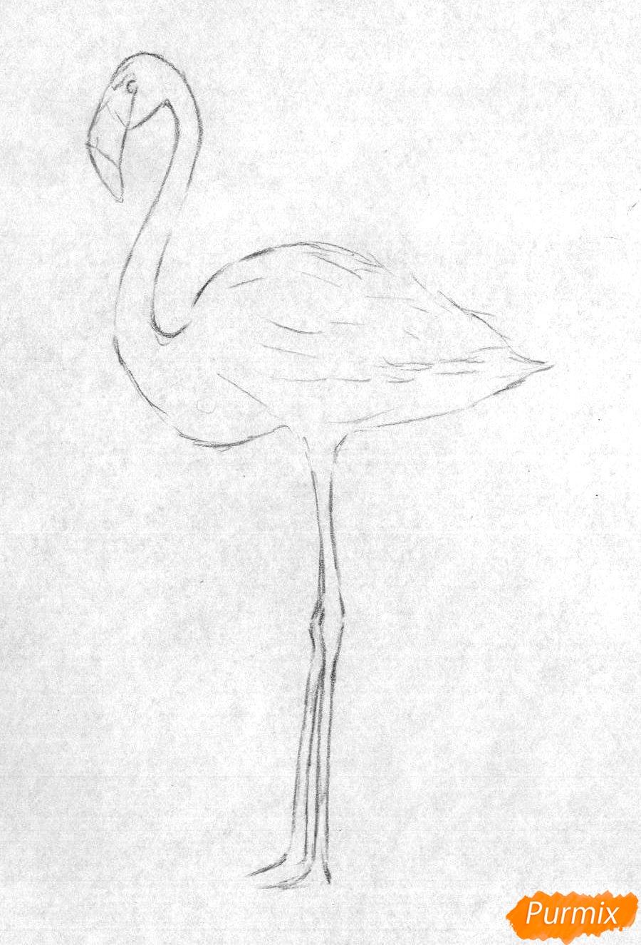 Рисуем фламинго в полный рост - шаг 1