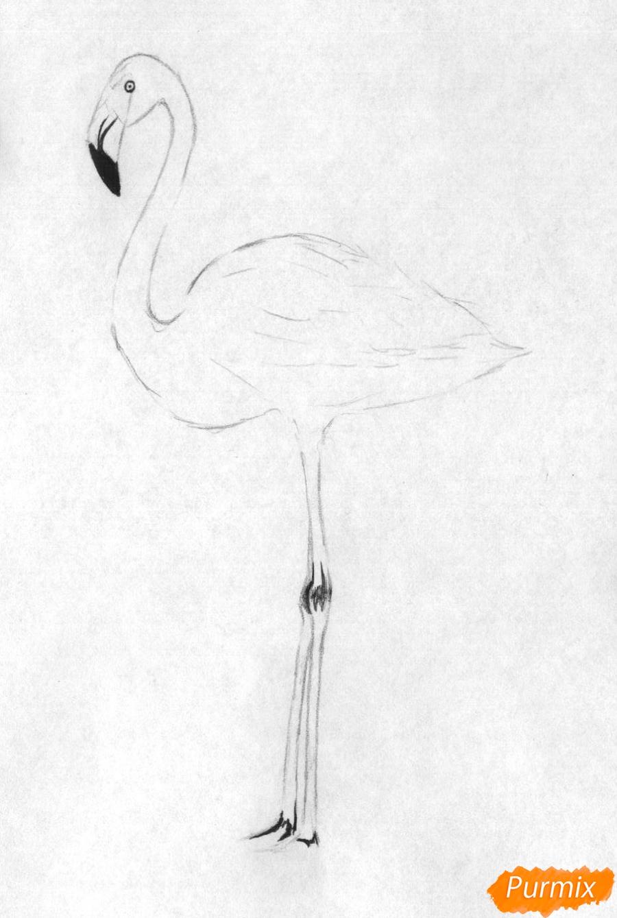 Рисуем фламинго в полный рост - шаг 2
