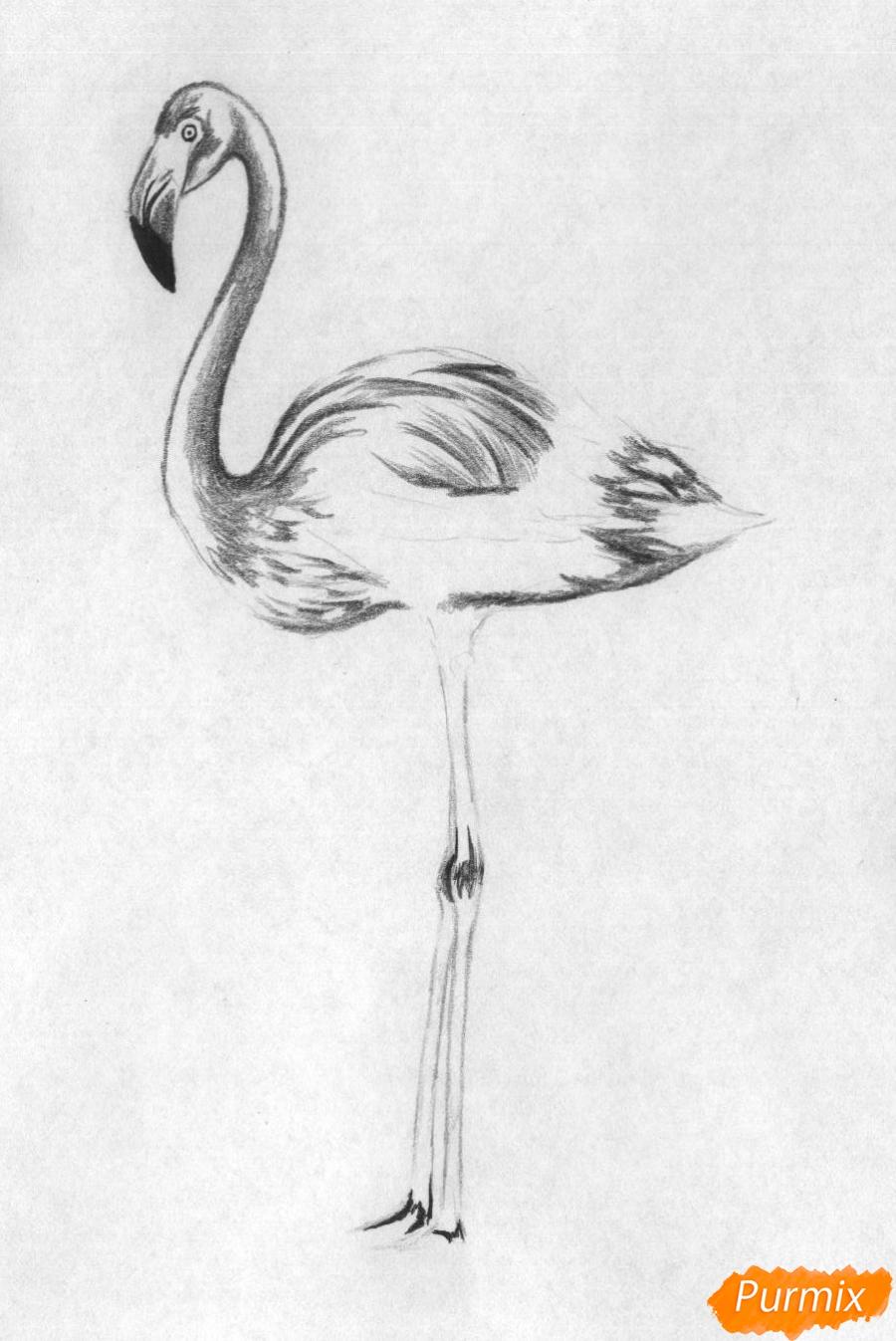 Рисуем фламинго в полный рост - шаг 3