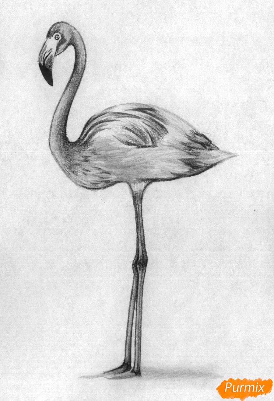 Рисуем фламинго в полный рост - шаг 4