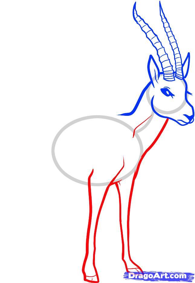 Рисуем животное газель - шаг 4