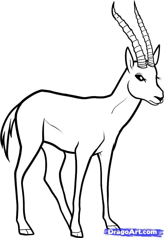 Как нарисовать животное газель карандашом поэтапно