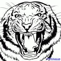 Фото голову бенгальского тигра карандашом
