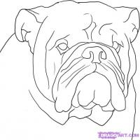 Как нарисовать голову Бульдога карандашом поэтапно