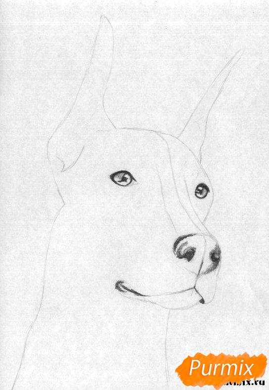 Рисуем голову добермана простым - шаг 2