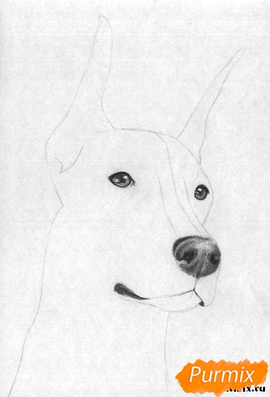 Рисуем голову добермана простым - шаг 3