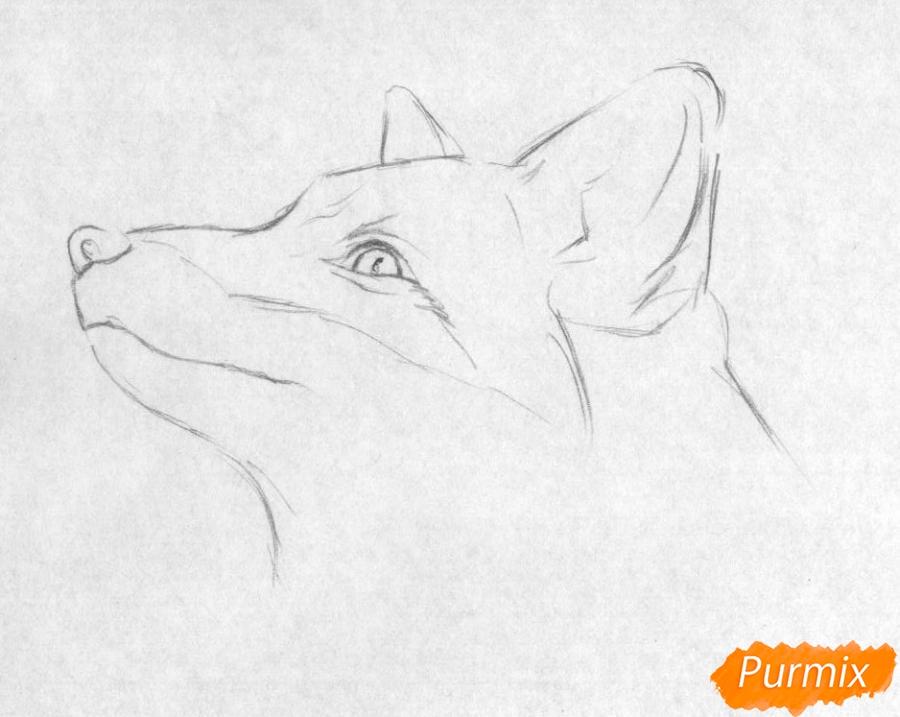 Рисуем голову лисы простыми карандашами и чёрной ручкой - шаг 1