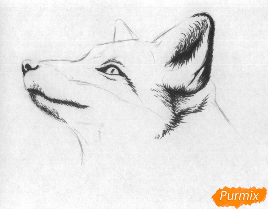 Рисуем голову лисы простыми карандашами и чёрной ручкой - шаг 2