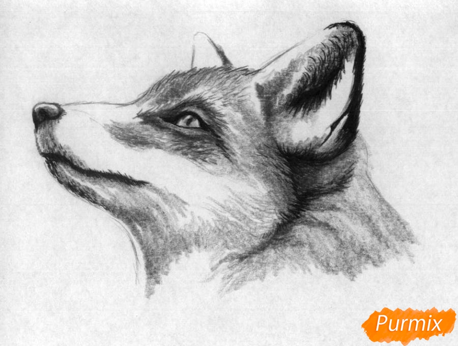 Рисуем голову лисы простыми карандашами и чёрной ручкой - шаг 3