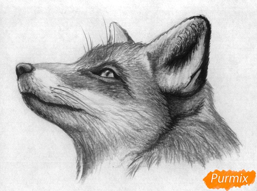 Как нарисовать голову лисы простыми карандашами и чёрной ручкой поэтапно