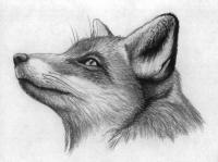 Фото голову лисы карандашами и ручкой